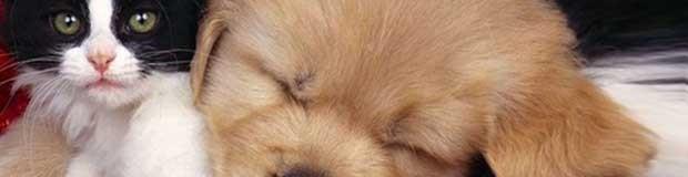 Тест на отношение к домашним животным