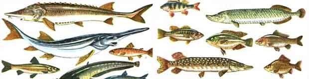 Проверить знание видов рыб